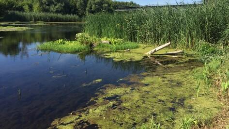 В Лискинском районе утонул 31-летний мужчина