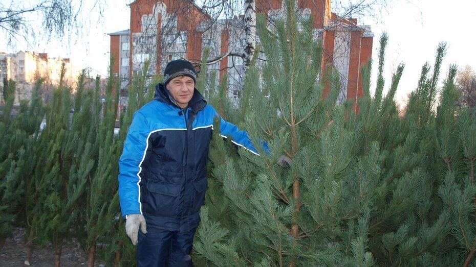 В Семилуках с 15 декабря начнется продажа елок