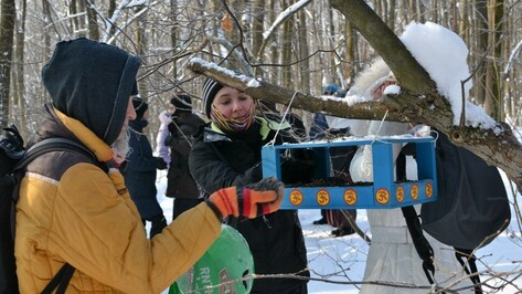 Воронежцы покормят птиц подорожавшими семечками
