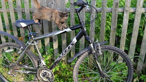 В Таловой трое жителей Тульской области угнали велосипеды, чтобы добраться на них до дома