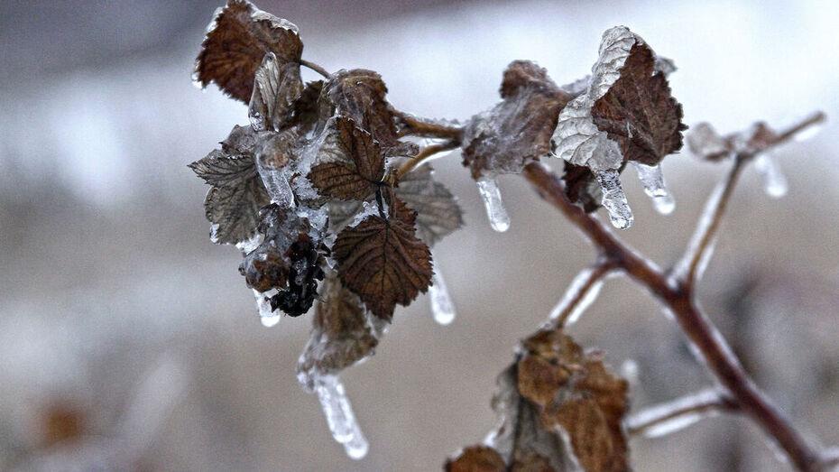 Ледяной дождь затруднил перемещение по Воронежу