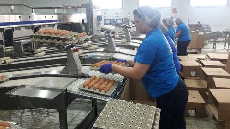 Крупнейшая птицефабрика Воронежской области выйдет на полную мощность в 2018 году