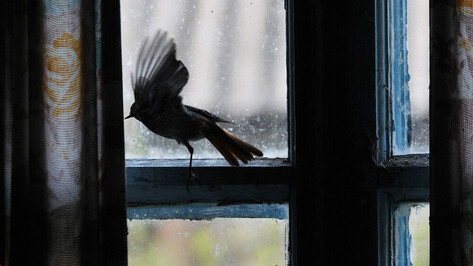 В «Дивногорье» воронежцев научат мастерить кормушки для птиц