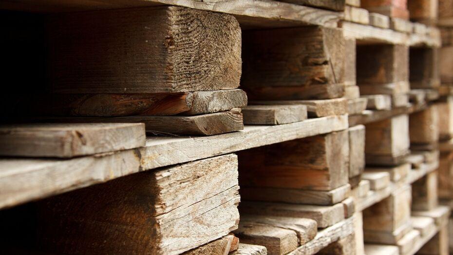 В Воронежском лесничестве запустили переработку низкотоварной древесины