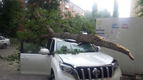 В Воронеже упавшее дерево разбило Toyota