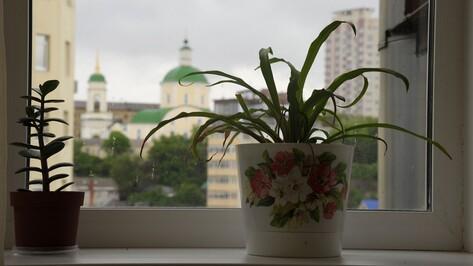 Метеорологи рассказали о погоде в Воронежской области летом 2017 года