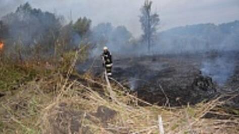В Россошанском районе в пойме реки Сухая Россошь выгорела сухая трава на площади около пяти гектаров