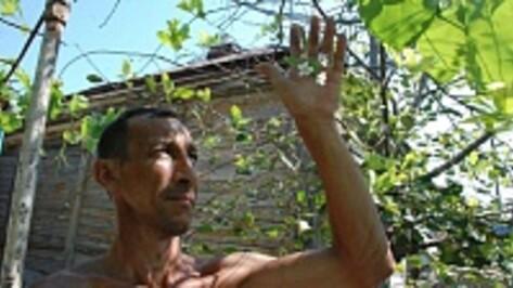 В Кантемировском районе в середине августа зацвели вишни