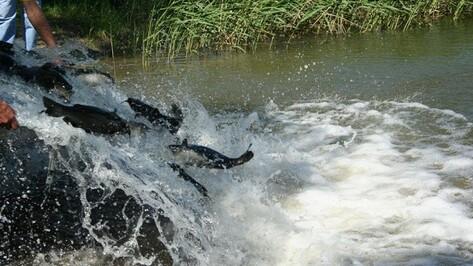 Нижнедевицкие рыболовы гарантировали себе хорошие уловы