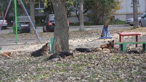 В Россоши бродячие собаки загрызли 24 курицы