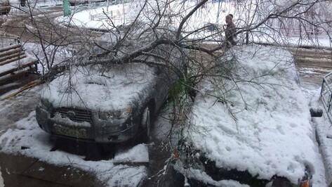 В Воронеже из-за сильного снегопада упало 10 деревьев