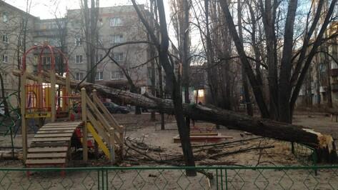 В Воронеже высокое дерево рухнуло на детскую площадку