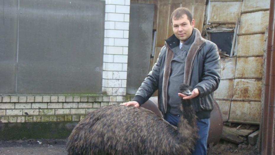 Фермер из Новохоперского района занялся разведением австралийских эму