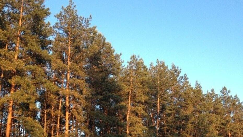 Пожарная видеоохрана появится во всех воронежских хвойных лесах к маю 2015 года