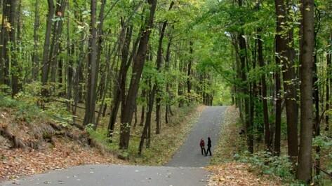 В Воронеже создадут критерии для определения границ лесопаркового зеленого пояса