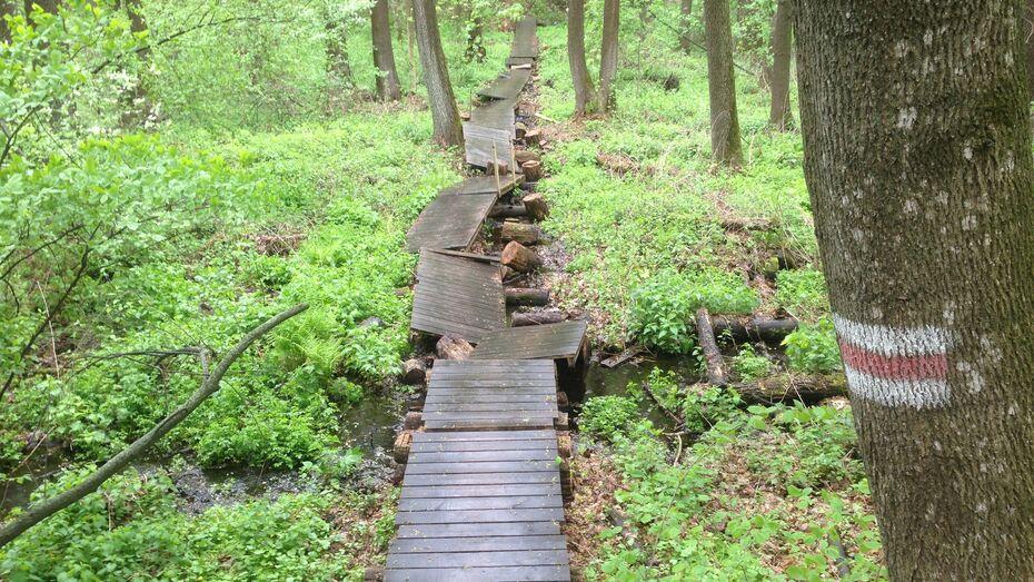 Воронежцев попросили помочь починить настил на Большой экотропе