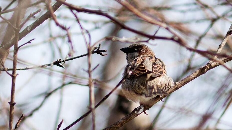 Воронежские зоозащитники освободят птиц на Благовещение
