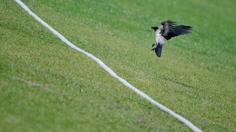 Обзор РИА «Воронеж»: как исчезали футбольные клубы региона