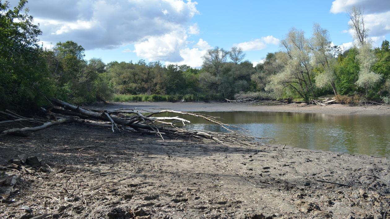 Только грязь и тина. В сельском поселении Воронежской области слили пруд