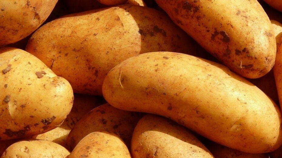 В Воронежской области откроется лаборатория безвирусного картофеля