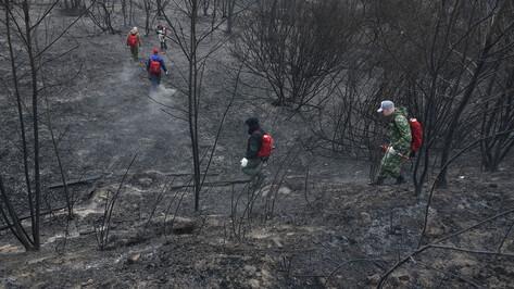 Взрывной рост температуры повлиял на пожароопасность в Воронежской области