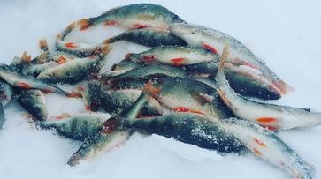 Кислородное голодание рыбы зафиксировали в водоемах Воронежской области