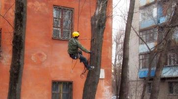В Воронеже альпинист спас кошку с верхушки 12-метрового дерева