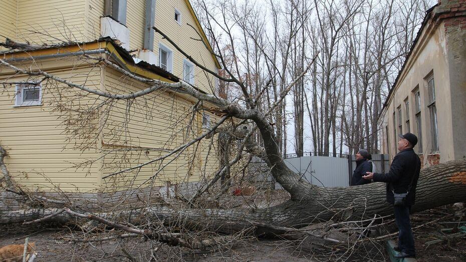 В центре Боброва сухое дерево упало на жилой дом