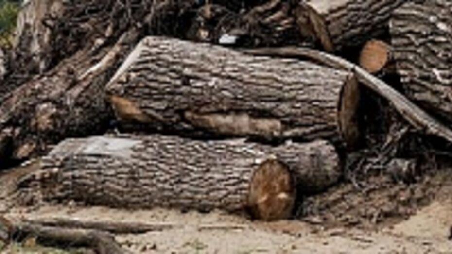 В Воронежской области браконьер вырубил 10 деревьев