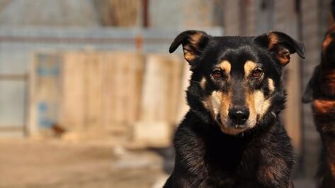 Воронежские зоозащитники попросили питьевую воду для животных приюта