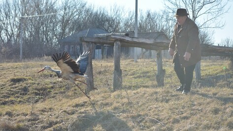 В Острогожском районе аиста, зимовавшего в сарае у местных жителей, выпустили на волю