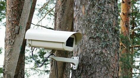 Воронежская область оказалась лидером по количеству видеокамер в лесах