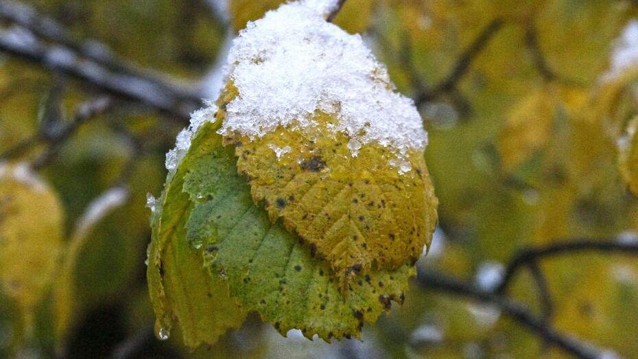 Подобие первого снега ждет воронежцев в конце недели