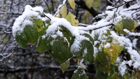 Синоптики рассказали, когда выпадет первый снег в Воронеже