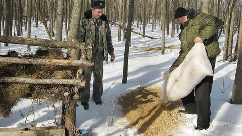 Панинские охотники подкормили зайцев и куропаток