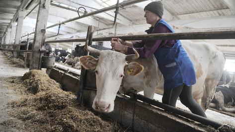 Шесть районов Воронежской области вошли в число передовиков по производству молока