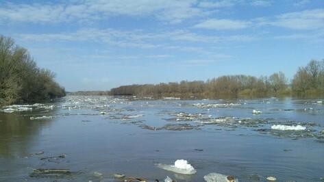 В Острогожском районе вода в Дону поднялась почти на три метра