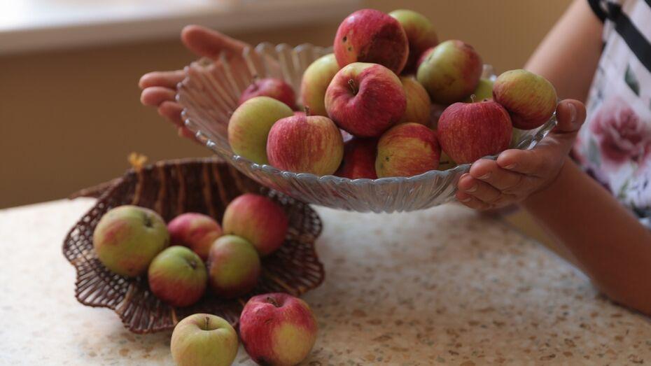 Бобровские журналисты угостят жителей яблоками и выпечкой