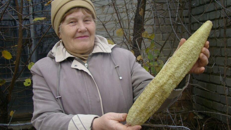 Жительница Новохоперска вырастила на огороде банную мочалку
