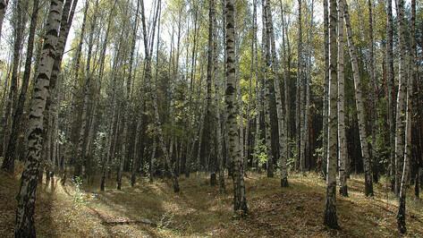Карбоновый полигон может появиться в Воронежской области