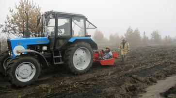 В районе павловской Николаевки начали восстанавливать сгоревший лес