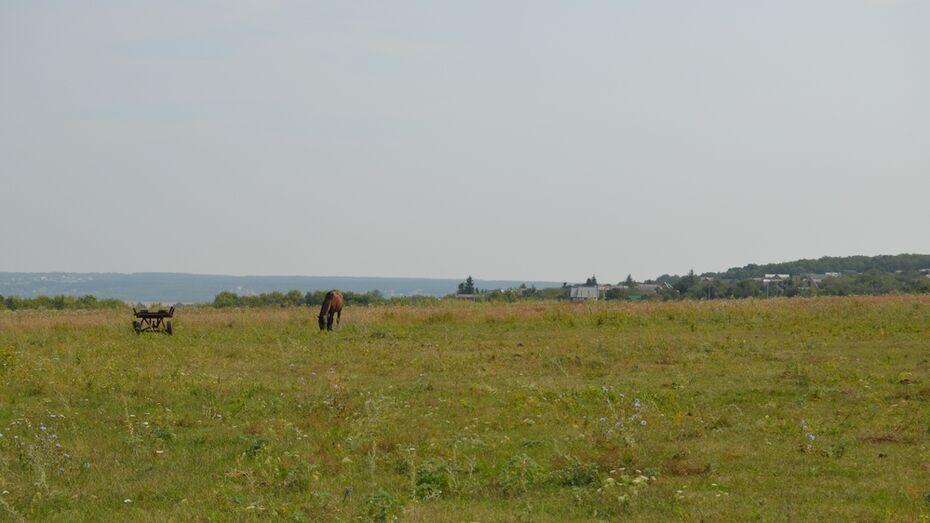 Семилукская райадминистрация выставила на торги 22 га сельхозземель