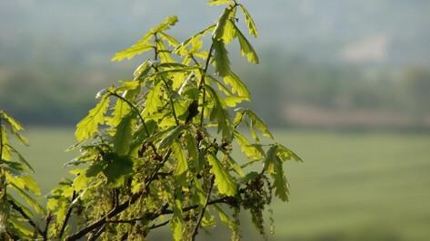 В Воронежском заповеднике пройдет экологический квест