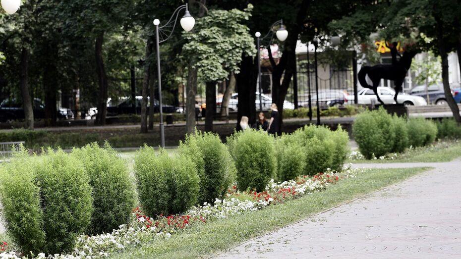 В Левобережном районе Воронежа построят новый парк