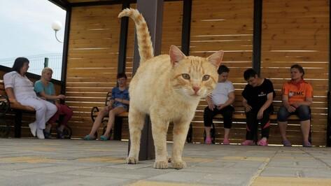 Репортаж РИА «Воронеж»: Алферовка. Выживший на пожаре в психинтернате кот встретил новых жильцов