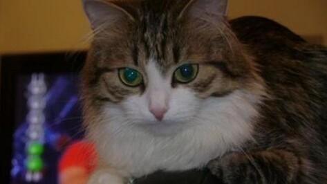 Кошка Сима предсказала победу «Бурана»