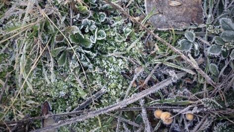 МЧС объявило штормовое предупреждение из-за заморозков в Воронеже