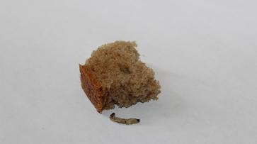 Жительница Терновки нашла в хлебе червяка