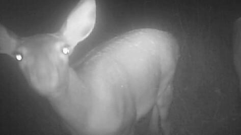 Реакцию животных на фотоловушки показал заповедник в Воронежской области