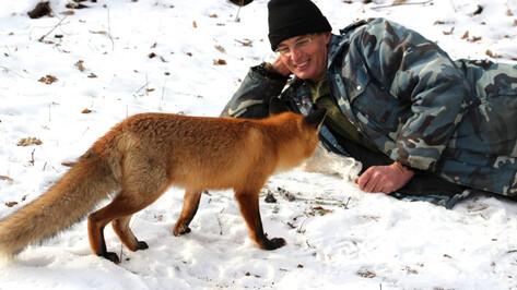 Воронежский заповедник опубликовал продолжение истории дружбы лиса и человека